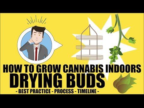 Drying Cannabis Plants - How to grow marijuana course for dummies - Growing Cannabis Indoors 101