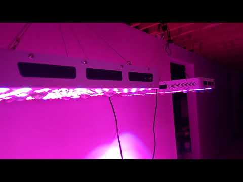 phlizon 3000w cree cob led growlights trying out both