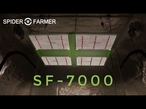 New Arrival! Spider Farmer SF 7000 Full Spectrum LED Grow Light For Indoor Cannabis Cultivation