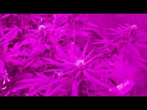 Bestva 2000 watt veg n flower