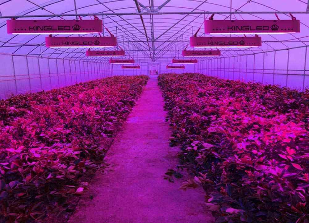 Featuring King Plus 1200W LED Grow Lights Review