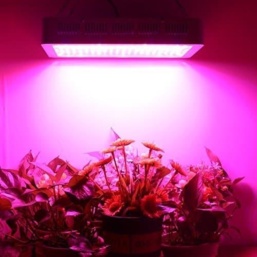 Higrow Inside grow space