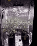 VIVOSUN 4x4 Grow Tent - Pictures, Specs, Opinions