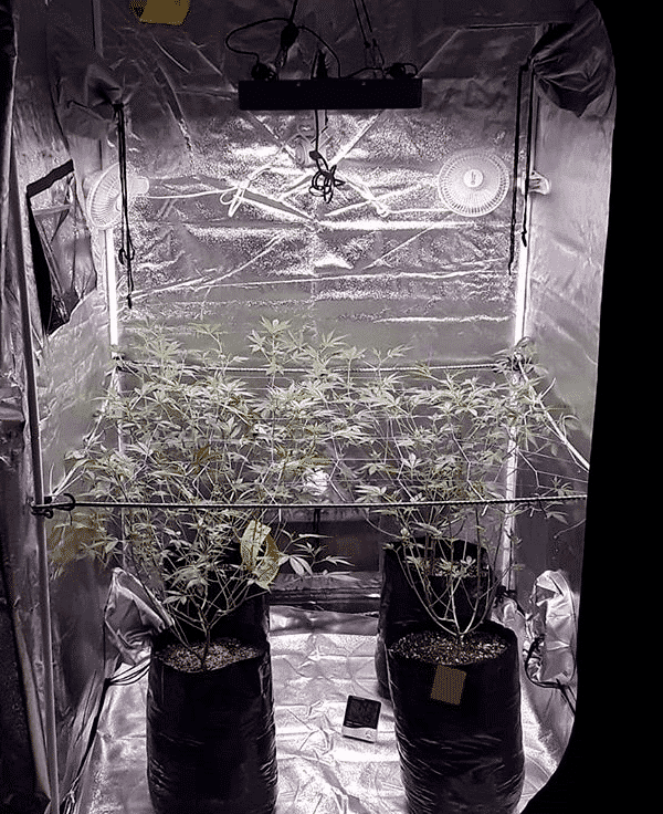 Best Led Grow Lights For 4x4 Grow Tents Pictures Specs