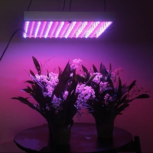 Leaving Grow Lights on 24 Hours: Is it Recommended?