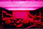 grow room led light