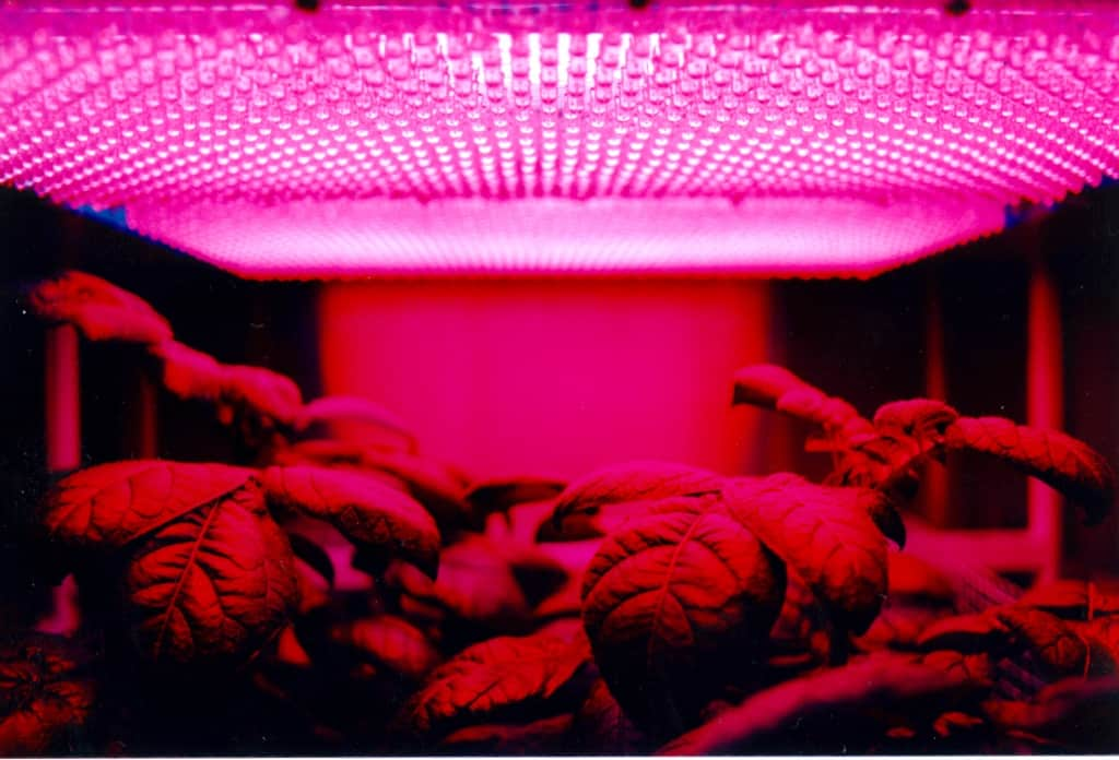 Why are LED grow lights Good for Plants?