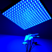 veg grow light