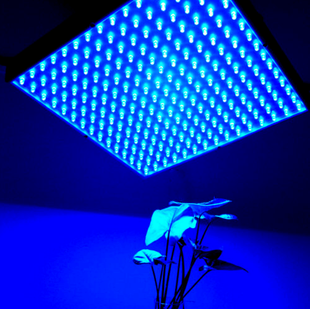 Best Grow Lights In 2020 For Seedlings Veg And Mother Plants