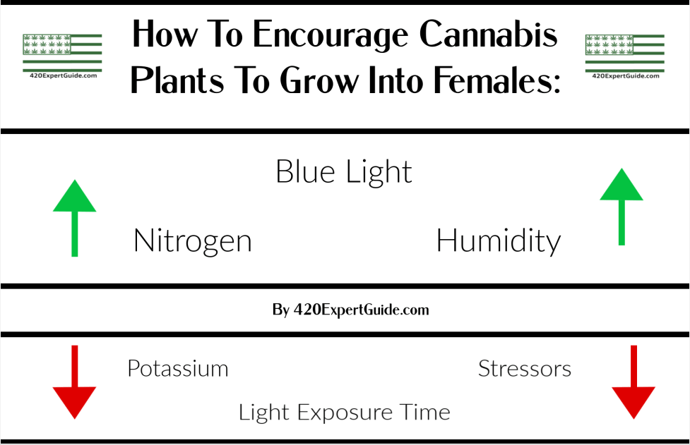 Read more about the article Grow More Female Cannabis Plants With These Essential Tips (2021)